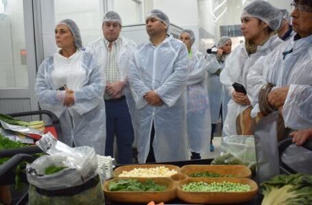 Crean Suplemento Vitamínico De Hortalizas Cultivadas En La Araucanía