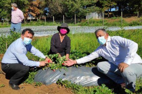 Gobernador Beltrán supervisó en terreno apoyo a emprendimiento mapuche en Collipulli