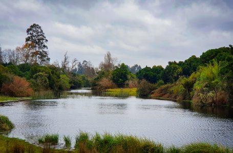 Comunidad Indígena José Cheuquean buscan proteger laguna Rengalil en Labranza