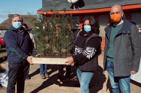 Red Apícola de Padre Las Casas recibió 3 mil nuevas plantas melíferas gracias a convenio con Conaf